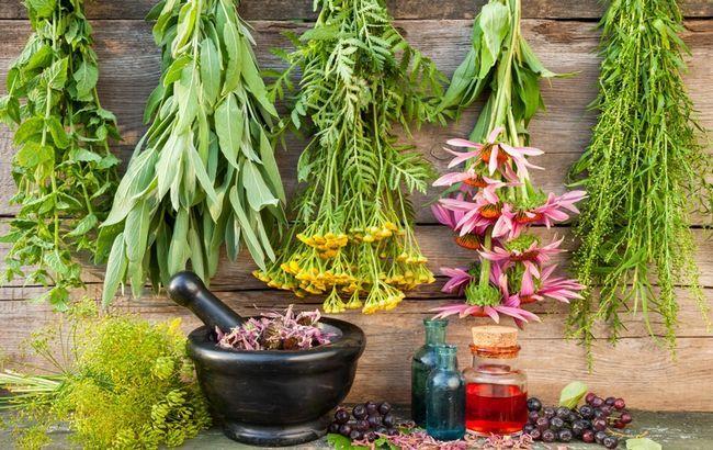 12 Лікарських рослин, здатних завдати шкоди здоров`ю