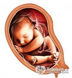 34 Тиждень вагітності