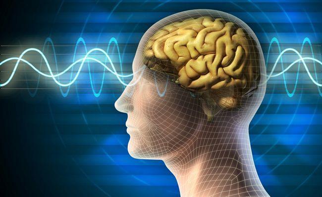 6 Найбільш поширених міфів про людський мозок