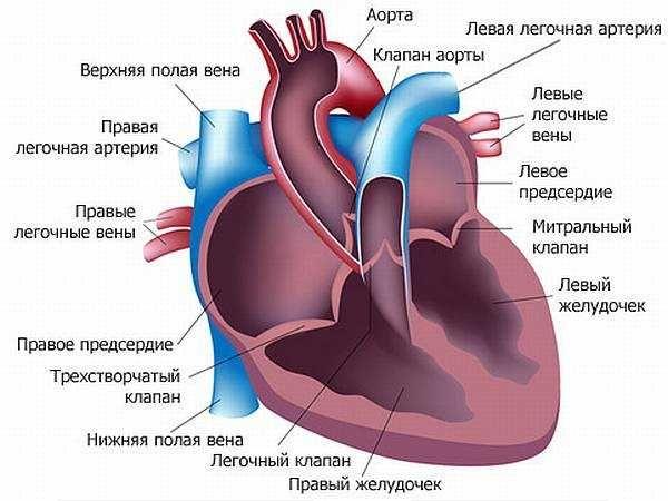 Діагностика, причини і симптоми стенокардії. Невідкладна допомога і лікування захворювання