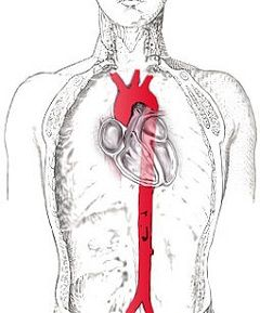 Грудна аорта