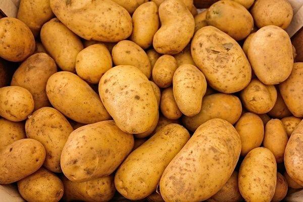 Картопля від виразки на мові