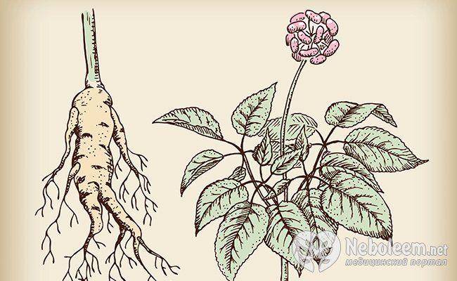 Як нас лікують рослини: лікарські трави і їх чудодійні властивості