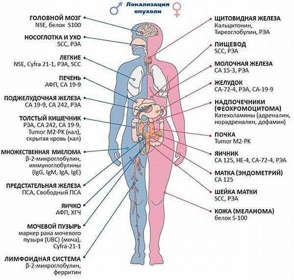 Як по аналізах визначити рак? Загальні аналізи при онкології, інструментальні методи діагностики