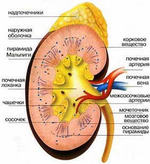 Класифікація захворювань нирок, симптоми, діагностика