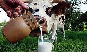 Козяче і коров`яче молоко дітям до року і після. Яке молоко можна дитині?