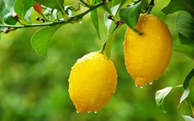 Лимон від веснянок: цитруси, на допомогу!