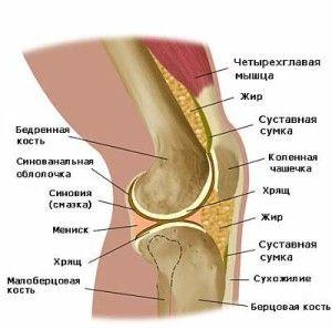 Нова зв`язка в колінному суглобі