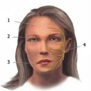 Неврит лицьового нерва: лікування, симптоми, причини