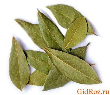Листя цього благородного рослини знайдуться в кожному будинку. Вони потрібна допомога в боротьбі з шкірними висипаннями!