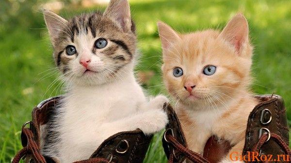Чому коти люблять смердючі речі?
