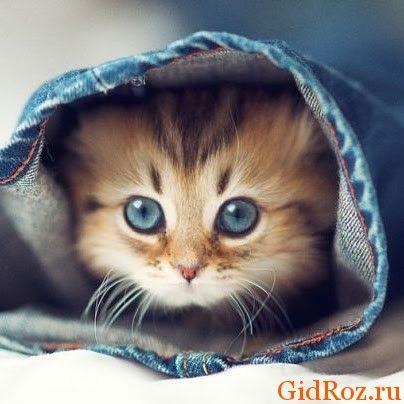 Помічено, що котів дуже приваблюють не зовсім приємні запахи. На це є ряд причин ...