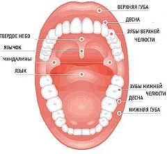 Порожнину рота