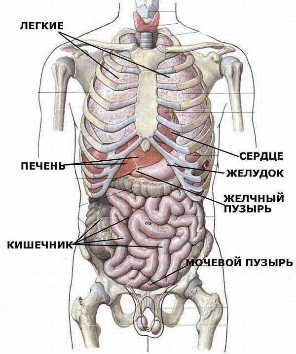 Причини тяжкості і болю в правому підребер`ї