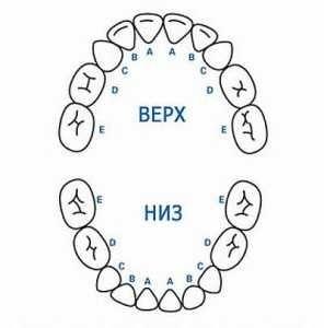 Прорізування зубів у немовлят: симптоми, терміни прорізування молочних зубів