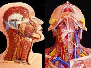 Рак шкіри голови, обличчя, шиї, носа - особливості захворювання, пов`язані з його розташуванням