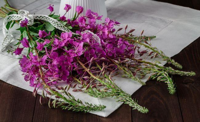 Рослина-лікар: 12 цілющих властивостей зніту
