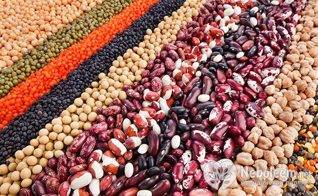 Різноманітність бобових культур