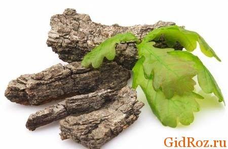 Хто з нас не знайомий з цим деревом? Його кора - найцінніше лікувальний засіб від поту!
