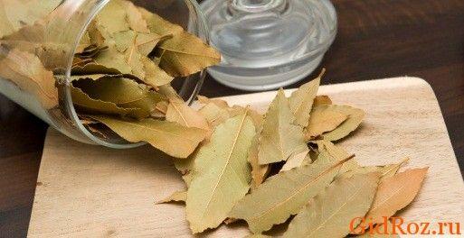 Відмінний засіб, здатне перемогти висип, є в кожній кухні. Це сухий лавровий лист!