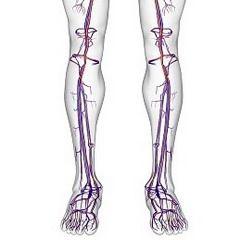 Відня нижніх кінцівок людини